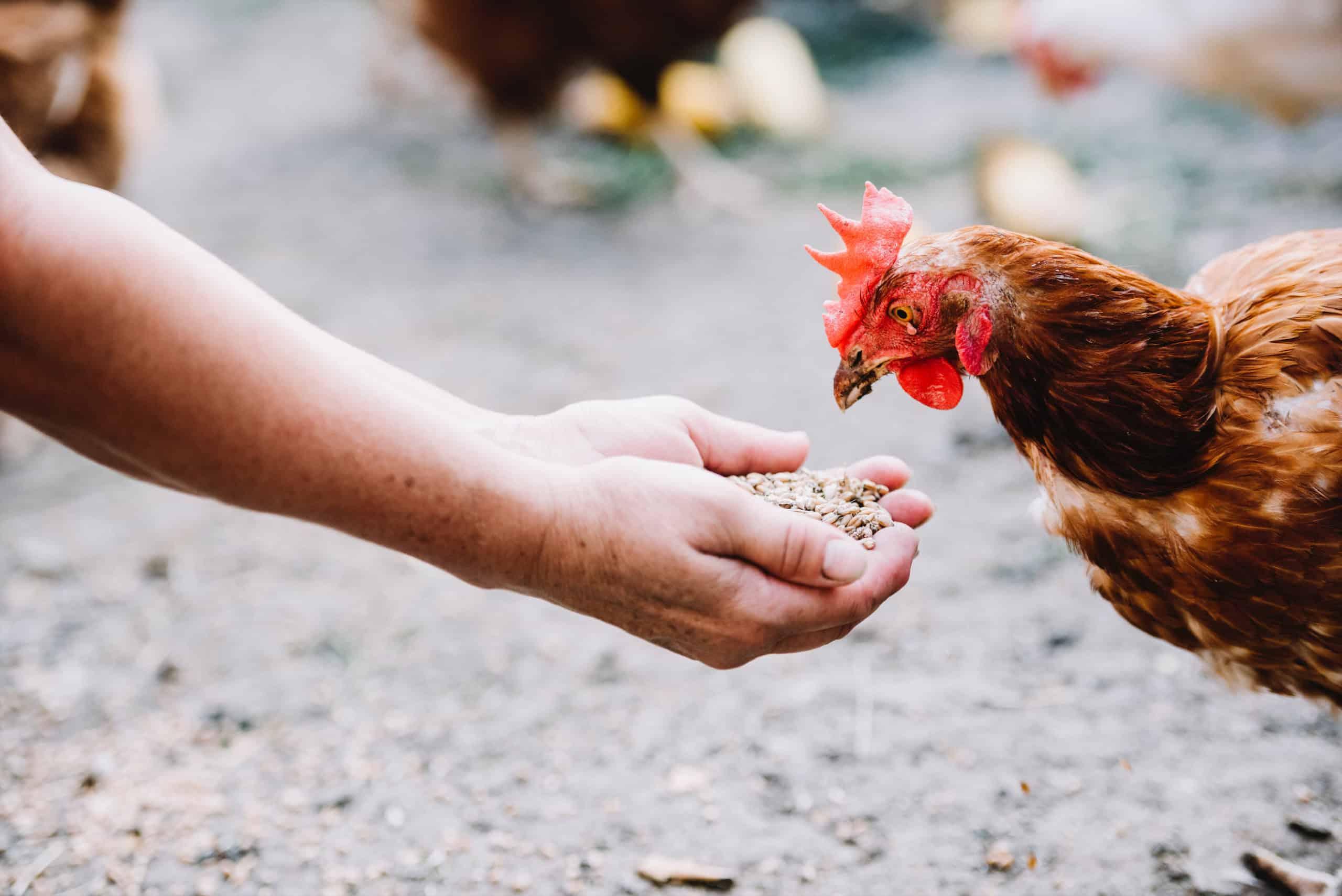 Landladen Beutersitz Hühnerfutter
