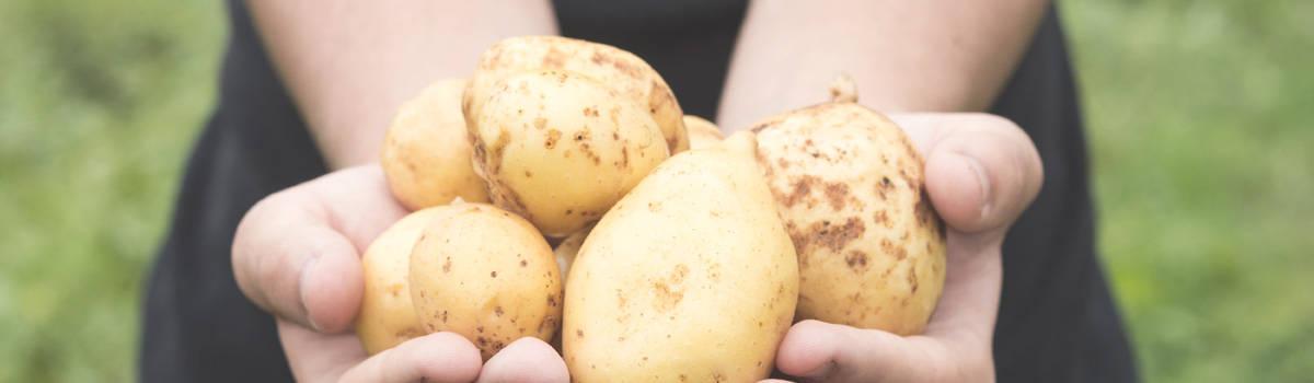 KArtoffeln Slider Frische Kartoffeln
